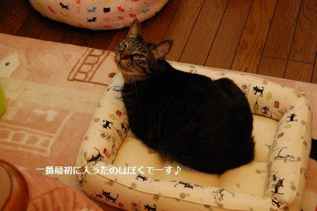 20120406kotetsu.jpg
