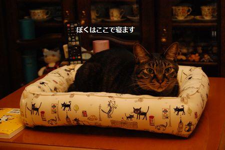 20120406kotetsu3.jpg
