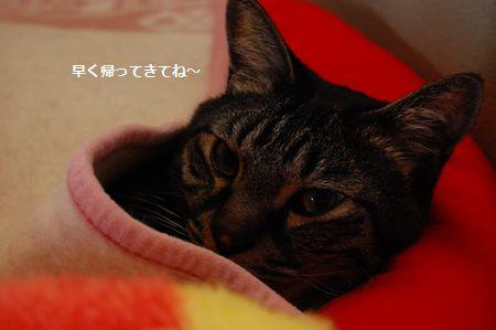 20120421kotetsu.jpg