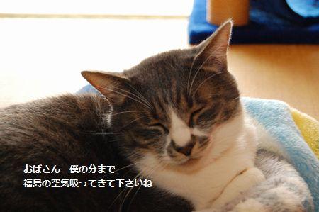 20120421miikun3.jpg