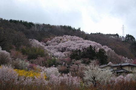 20120423hanamiyama5.jpg