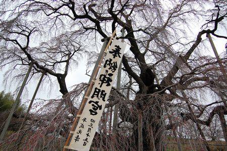 20120423takizakura.jpg