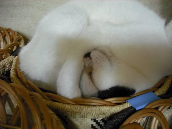けっこう猫だらけ