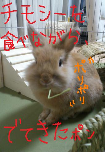 DSC_0390_20111024214935.jpg