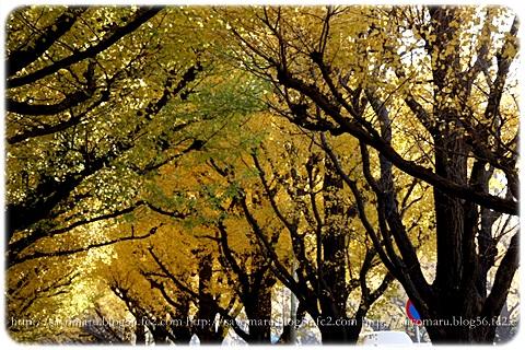 sayomaru7-794.jpg
