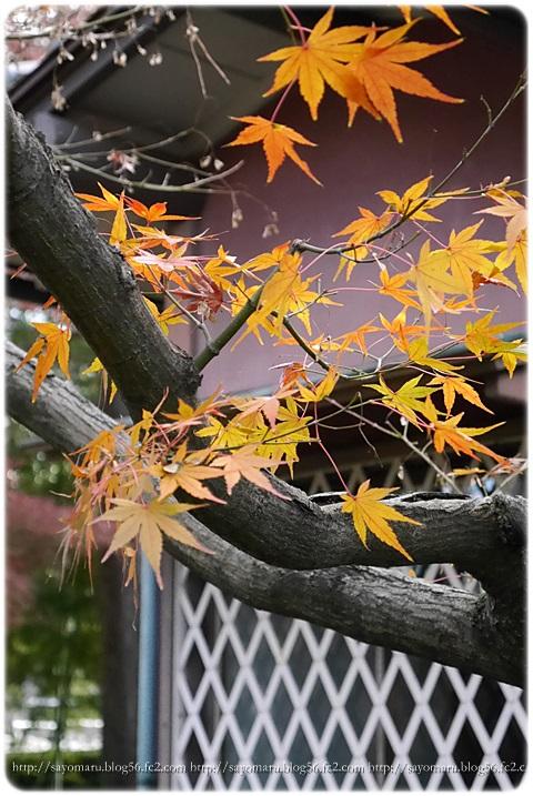 sayomaru7-917.jpg