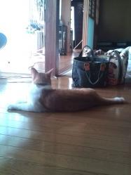 ネコ同士の距離感