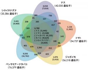 Solanaceae genes