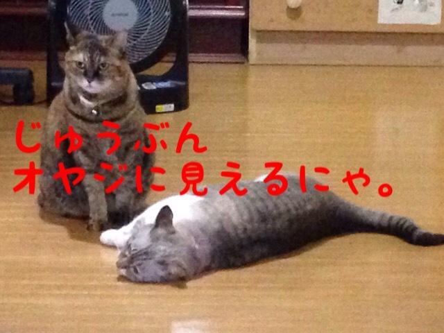 fc2blog_20140919110348036.jpg
