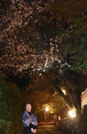 夜桜と一人 WEBmini