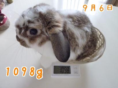 体重測定9・6
