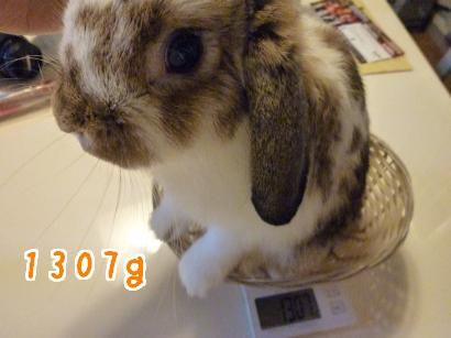 体重測定10.17