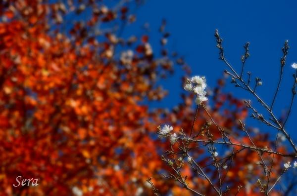 秋晴れ~!