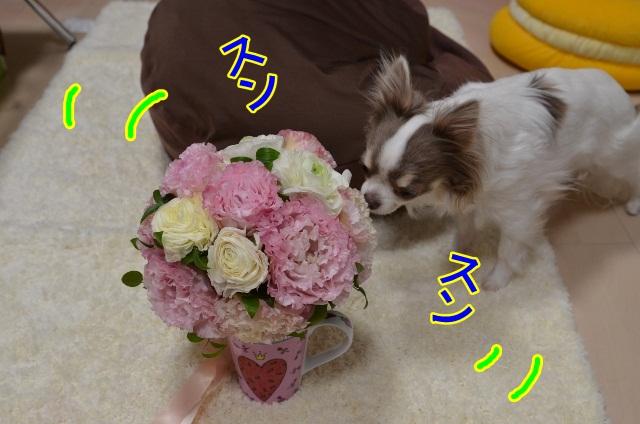DSC_5283 (640x424)