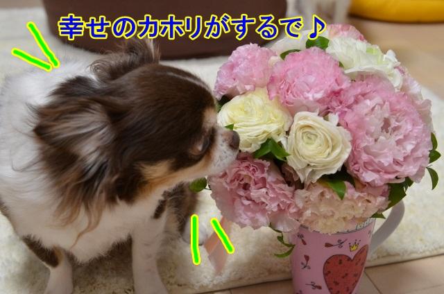 DSC_5286 (640x424)