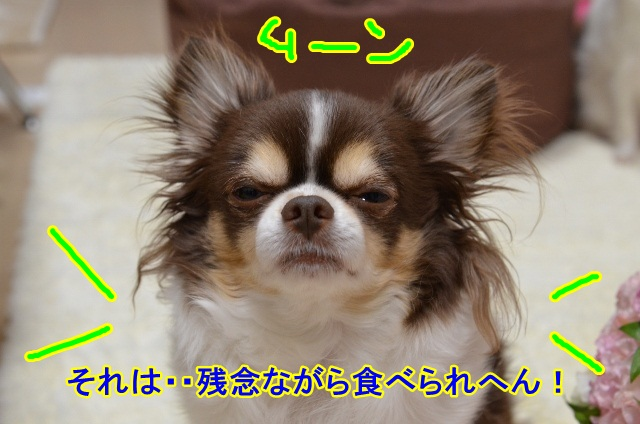 DSC_5290 (640x424)