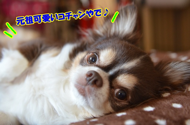DSC_4735_20130225204015.jpg