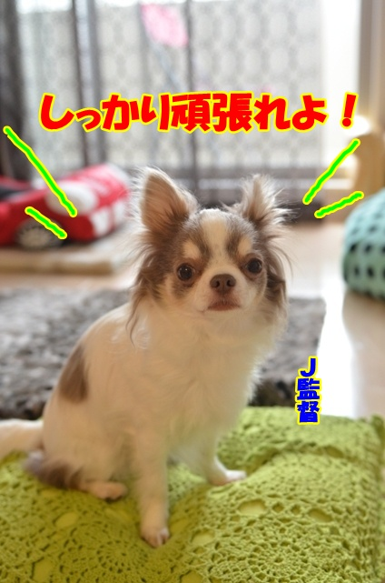 DSC_4785.jpg