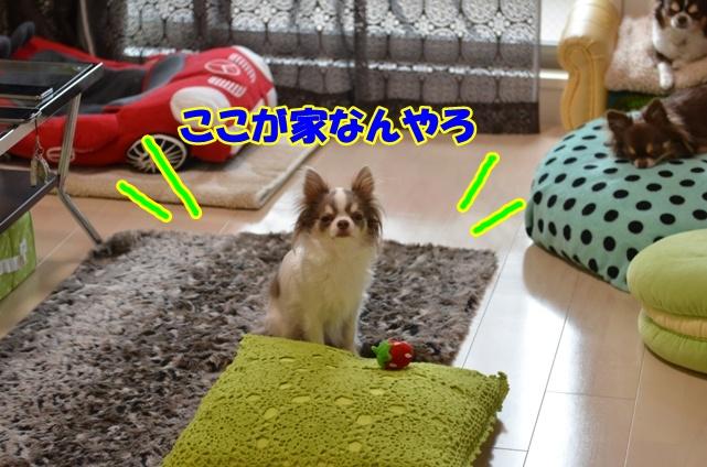 DSC_4789_20130311223138.jpg