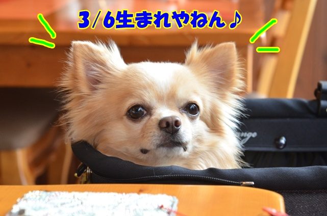 DSC_4971_20130324213014.jpg