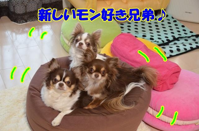 DSC_5031_20130326220347.jpg