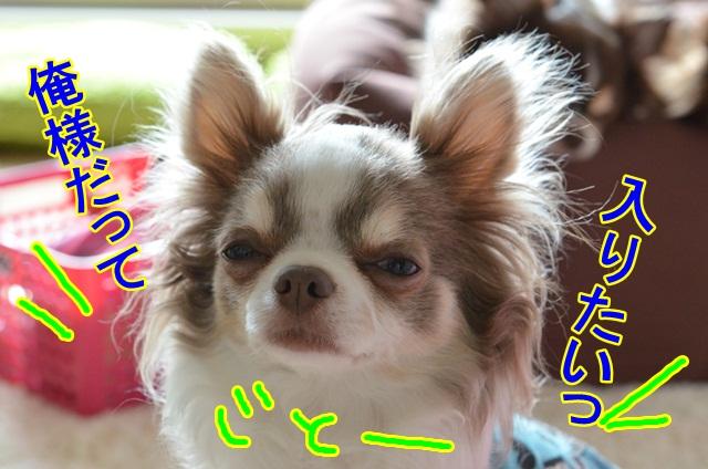 DSC_5325_20130414195514.jpg