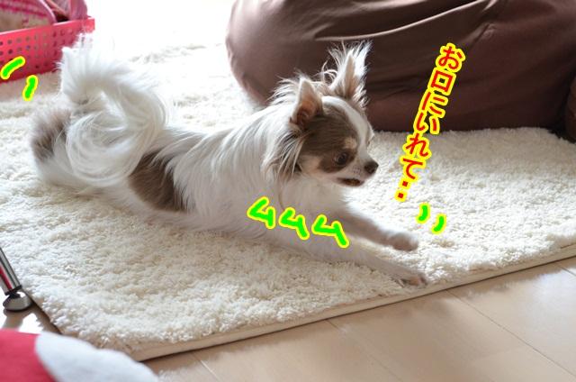 DSC_5569_20130421204239.jpg