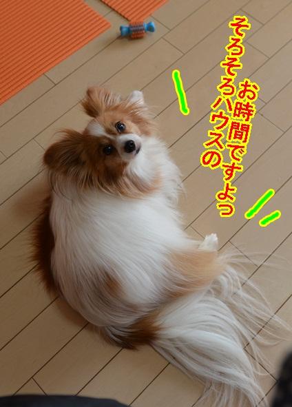 DSC_5681_20130426221749.jpg