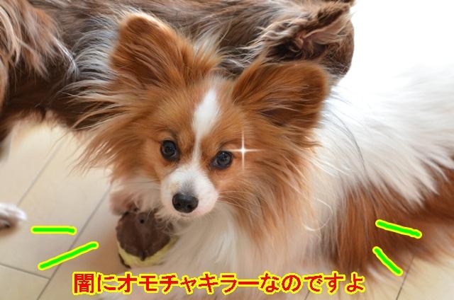 DSC_5684_20130428215147.jpg