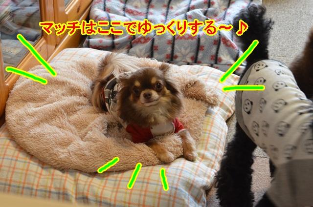 DSC_6178.jpg