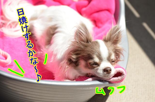 DSC_6334_20130521201842.jpg