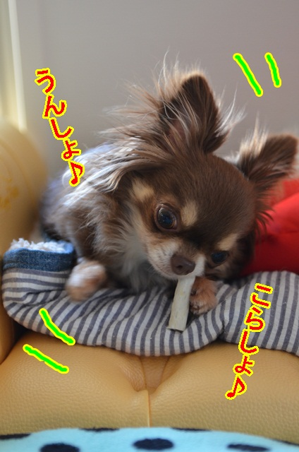 DSC_6351_20130516191236.jpg