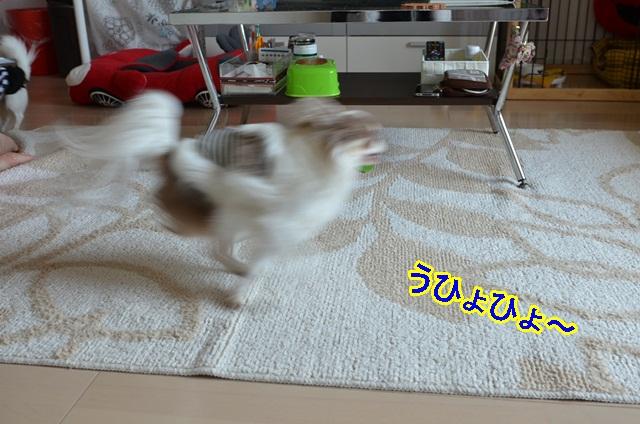 DSC_6403.jpg