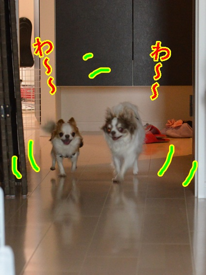 DSC_6405.jpg