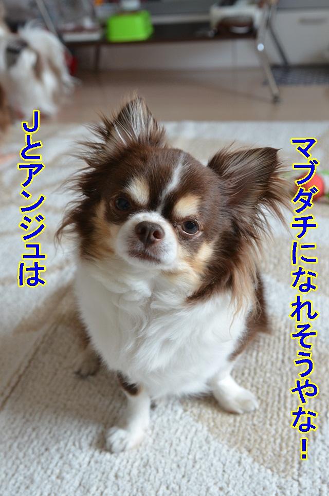 DSC_6425.jpg