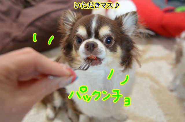 DSC_6435.jpg