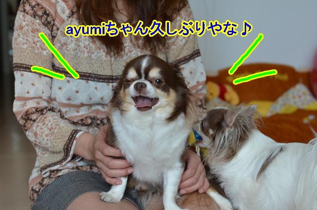 DSC_6441_20130520164457.jpg