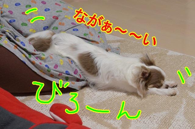 DSC_6565_20130601153735.jpg