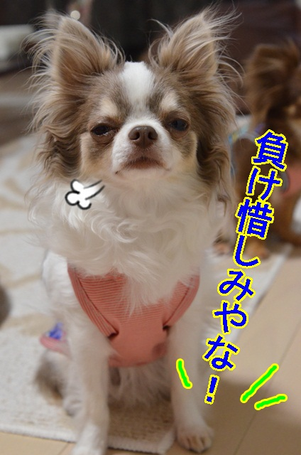DSC_6610_20130602215545.jpg
