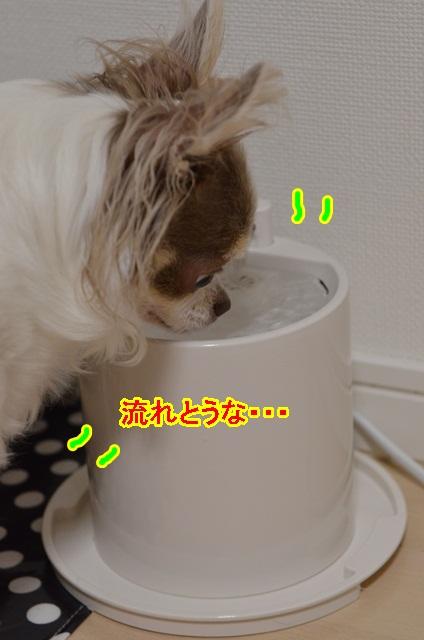DSC_6785_20130613155754.jpg