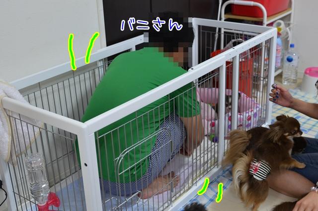 DSC_6973_20130620123934.jpg