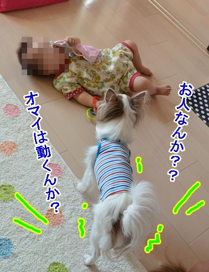 DSC_7401.jpg