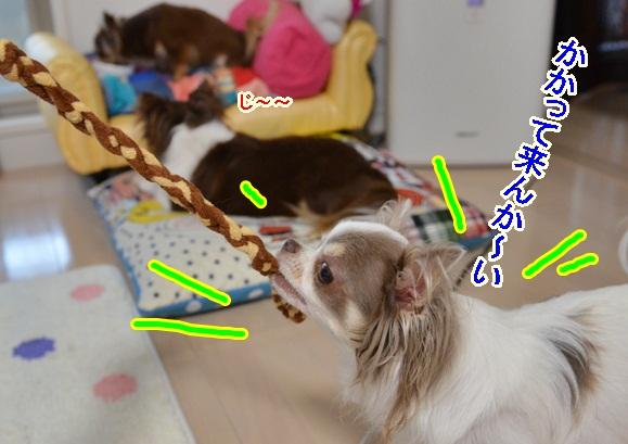 DSC_7752_20130721124247.jpg