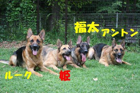 IMG_3921.jpg