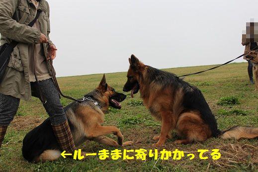 IMG_4982.jpg