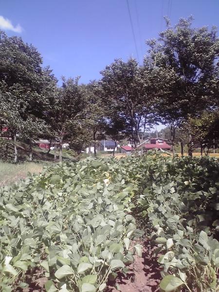 正受庵裏の畑