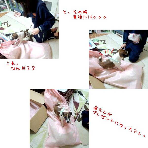 cats_20130313124056.jpg