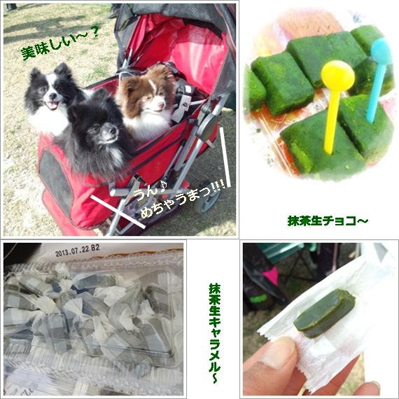 cats_20130412165610.jpg
