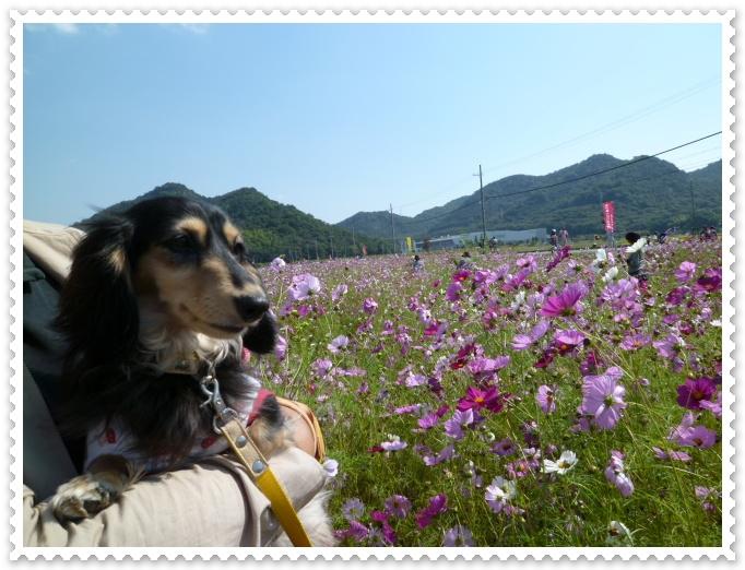 10_20111018141039.jpg