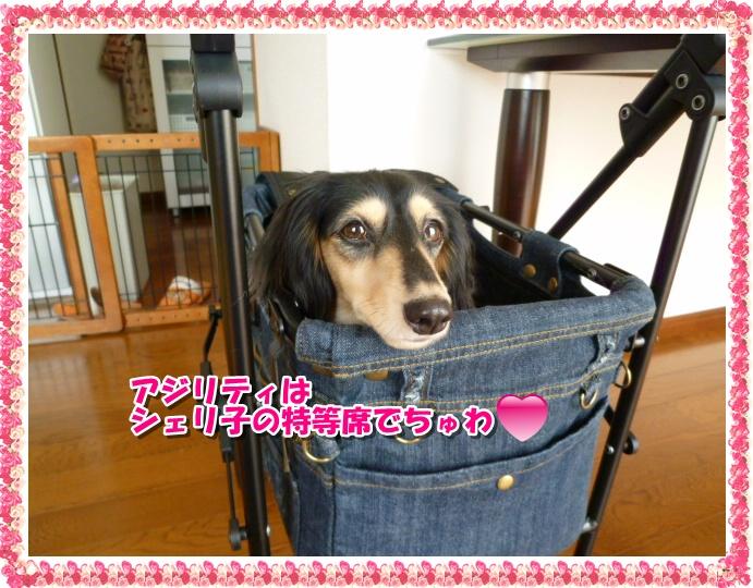 11_20111013131047.jpg